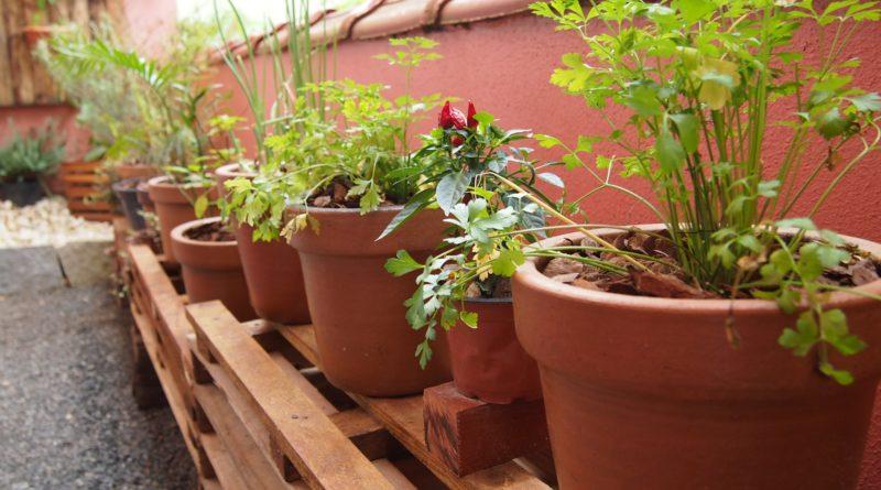 Cartilha ensina como cultivar uma horta em pequenos espaços